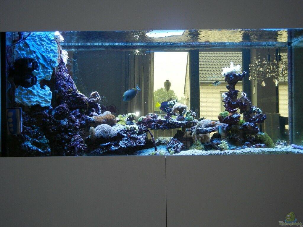 aquarium von juwa 800l aquarium einrichtungsbeispiele. Black Bedroom Furniture Sets. Home Design Ideas