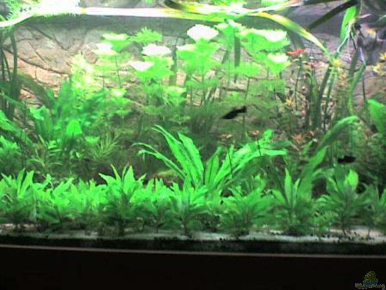 aquarium von kleines becken g rlitzer wasser. Black Bedroom Furniture Sets. Home Design Ideas