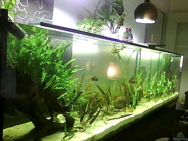 Aquarium von christian franke asien biotop for Aquarium einrichtungsideen