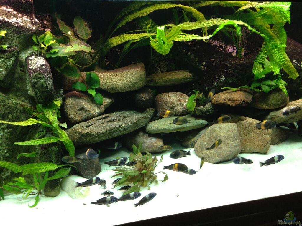 aquarium von thomas nohr tanganjika zu hause