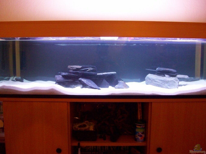 aquarium von piomissambia tanganjika becken. Black Bedroom Furniture Sets. Home Design Ideas
