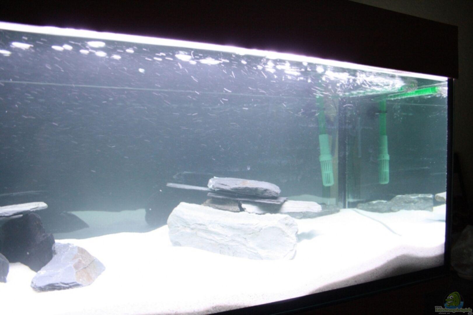 aquarium von piomissambia 16614 tanganjika becken. Black Bedroom Furniture Sets. Home Design Ideas