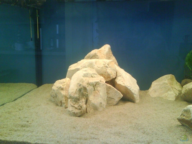 aquarium von blubb blubb becken 16669. Black Bedroom Furniture Sets. Home Design Ideas