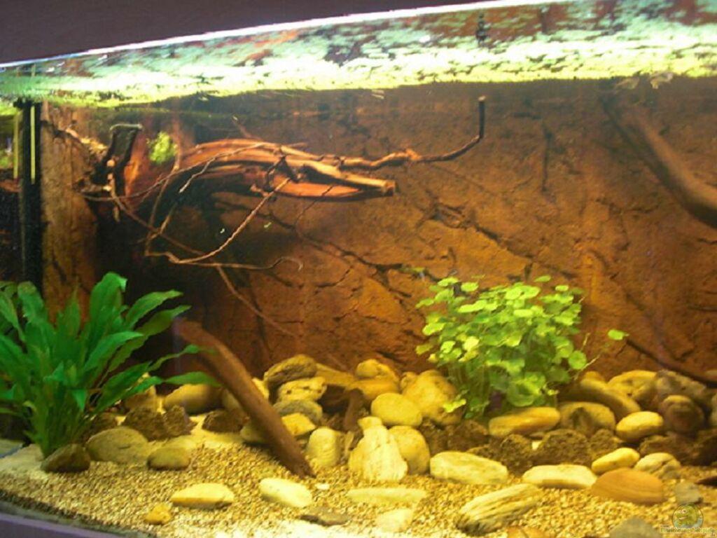 aquarium von amazonas83 wf uatuma diskus. Black Bedroom Furniture Sets. Home Design Ideas