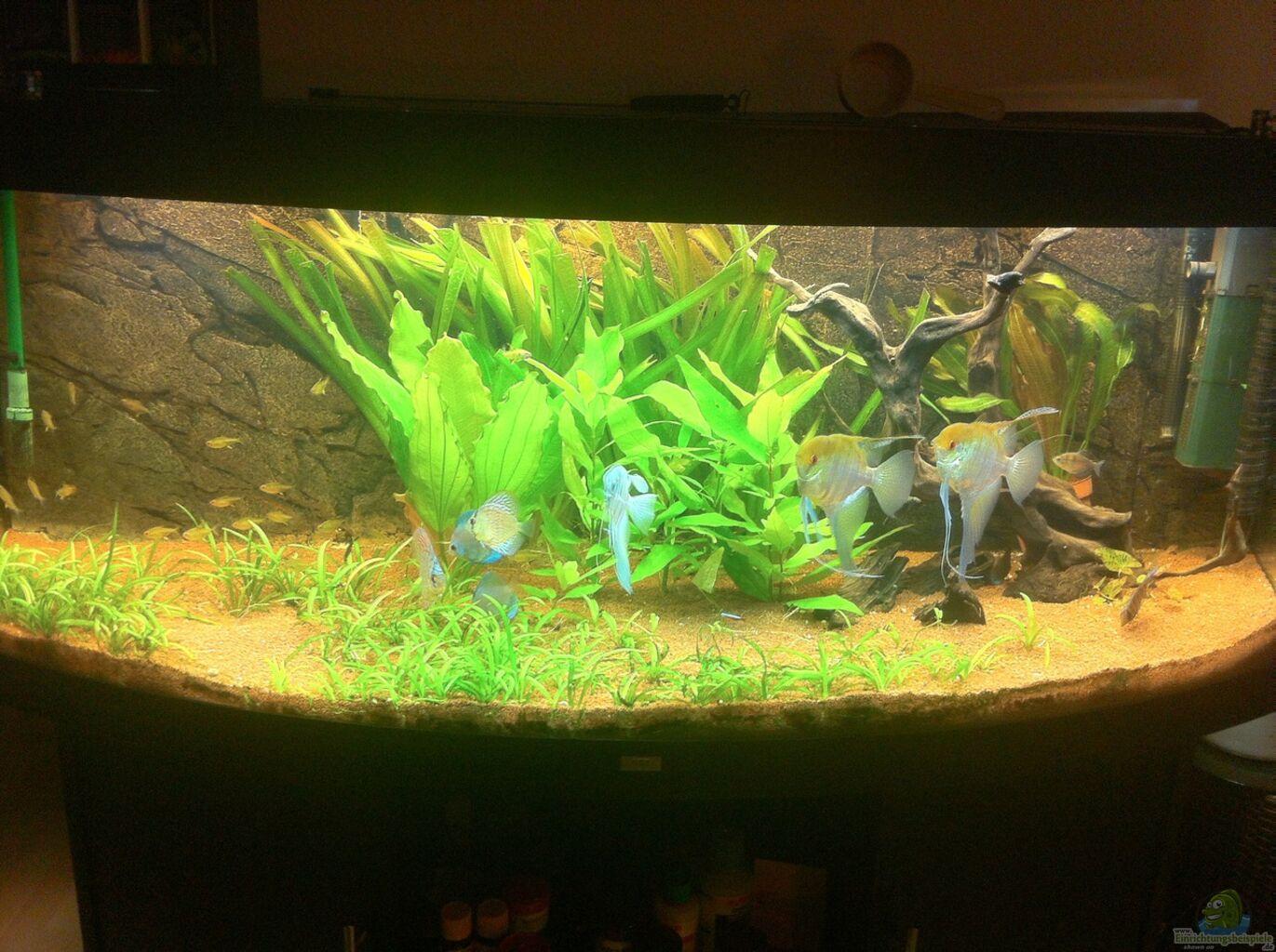aquarium von jan k juwel vision 450. Black Bedroom Furniture Sets. Home Design Ideas