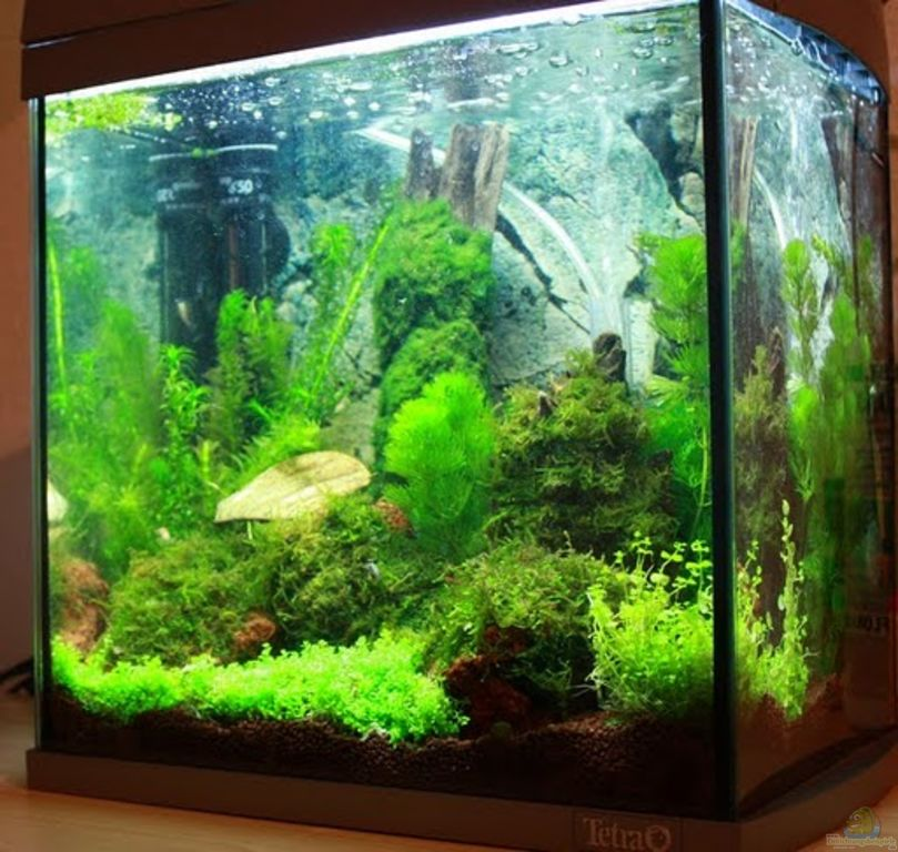 aquarium von flo1104 mein erstes garni becken. Black Bedroom Furniture Sets. Home Design Ideas