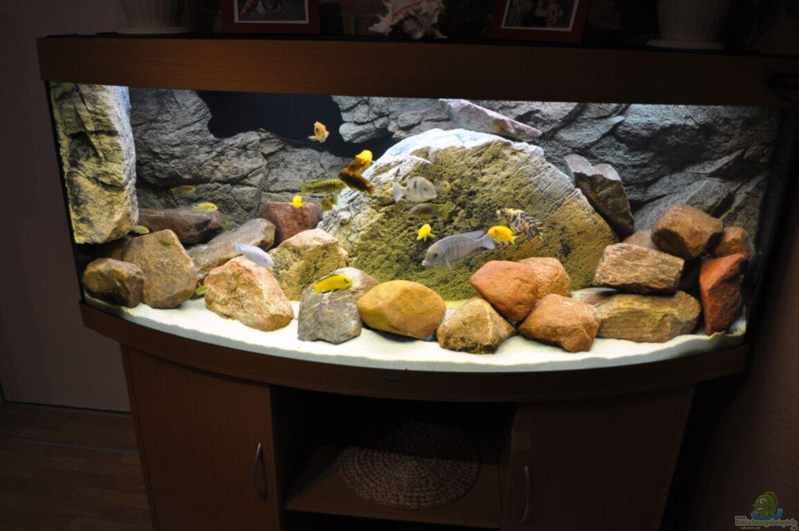 Aquarium von vladi becken 16908 for Zierfische hannover