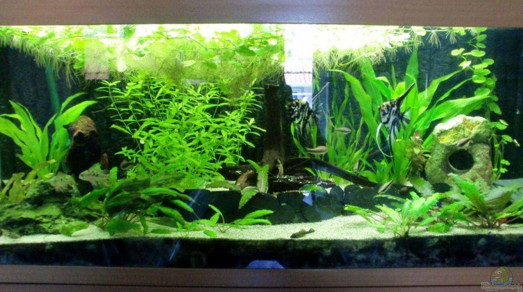 aquarium von schecki juwel rio 240. Black Bedroom Furniture Sets. Home Design Ideas