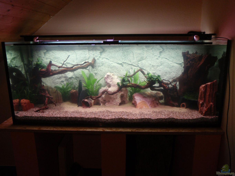 aquarium von loufe west aquariumbeispiele. Black Bedroom Furniture Sets. Home Design Ideas