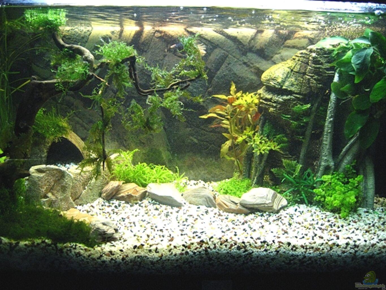 aquarium von zerosun8311 juwel rekord. Black Bedroom Furniture Sets. Home Design Ideas