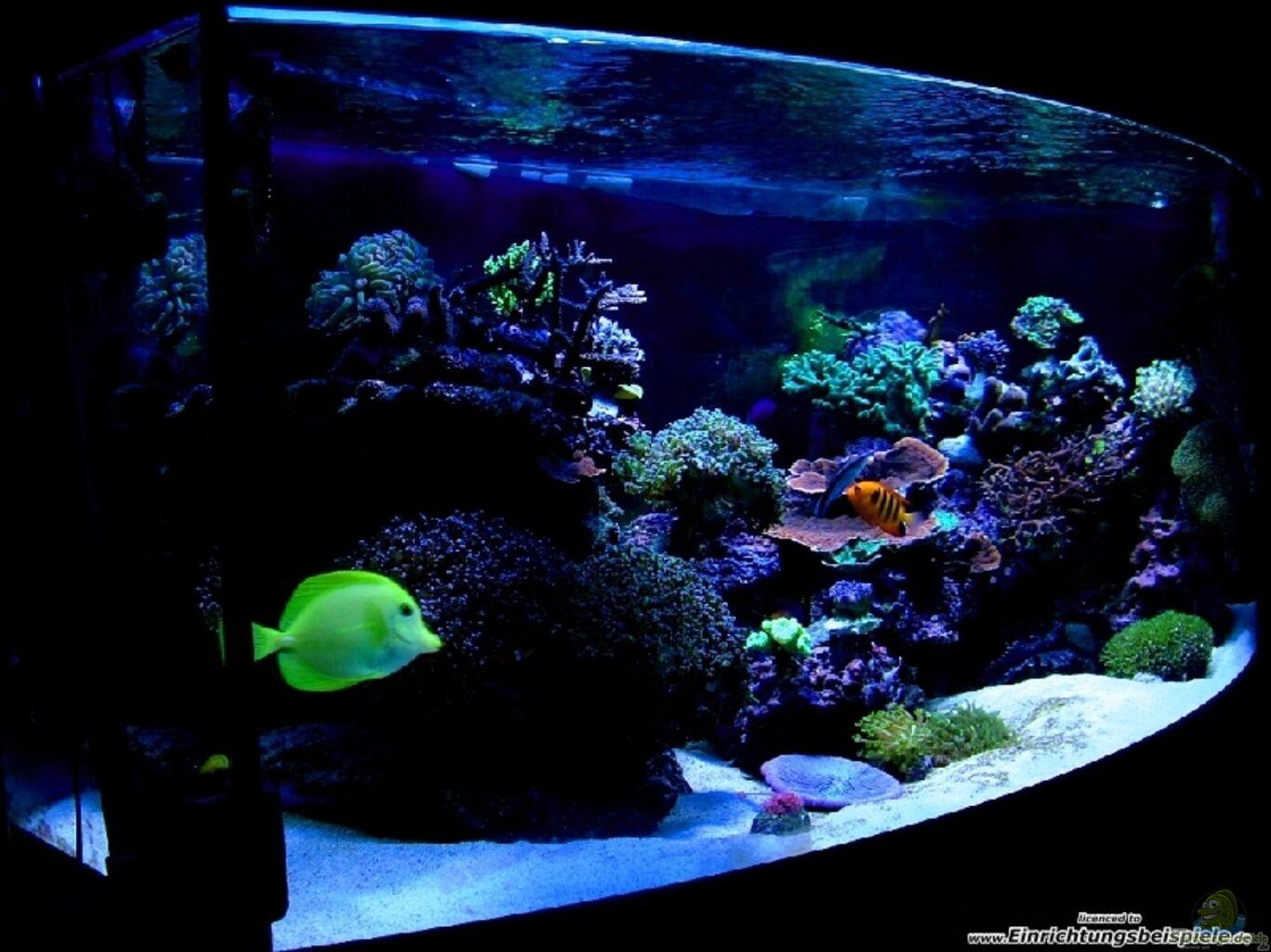 Aquarium von yates : Aquarium von chi redseareef