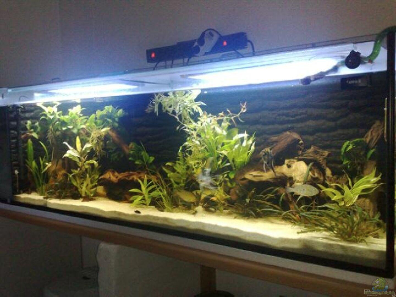 aquarium von skalarvonwels becken 17075. Black Bedroom Furniture Sets. Home Design Ideas