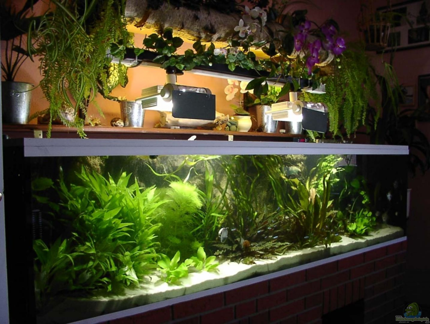 aquarium von siegfried wagner becken 17109. Black Bedroom Furniture Sets. Home Design Ideas