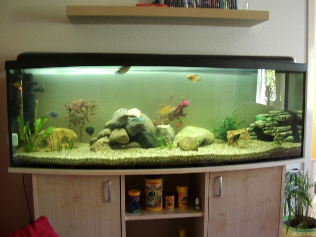Aquarium von mark m becken 17115 for Aquarium einrichtung