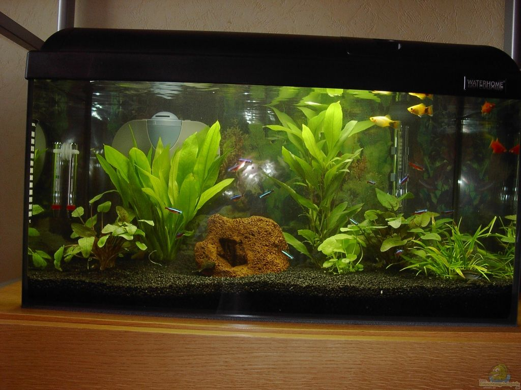Aquarium von streaknet 60er becken for Waterhome aquarium