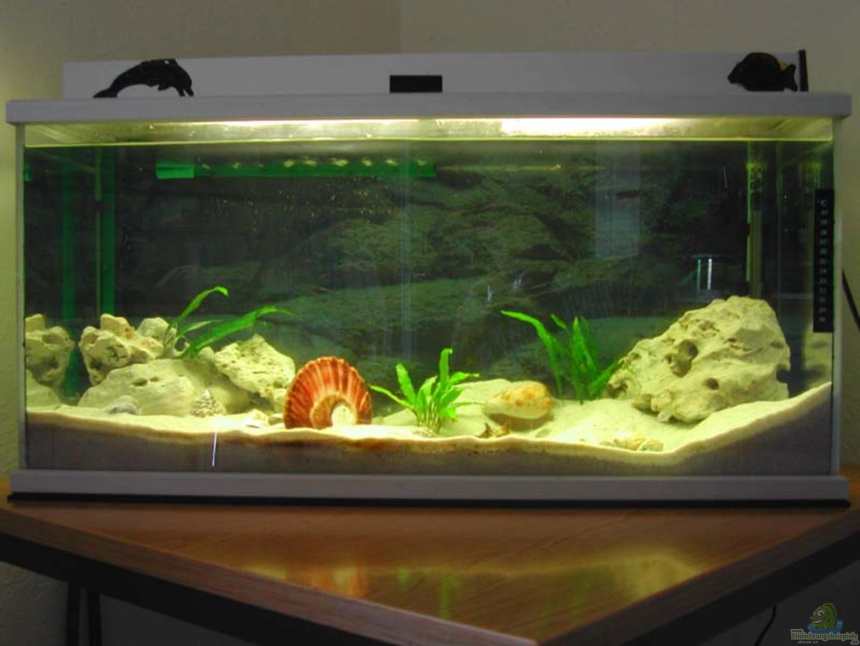 aquarium von dirk schepmann becken 1719. Black Bedroom Furniture Sets. Home Design Ideas