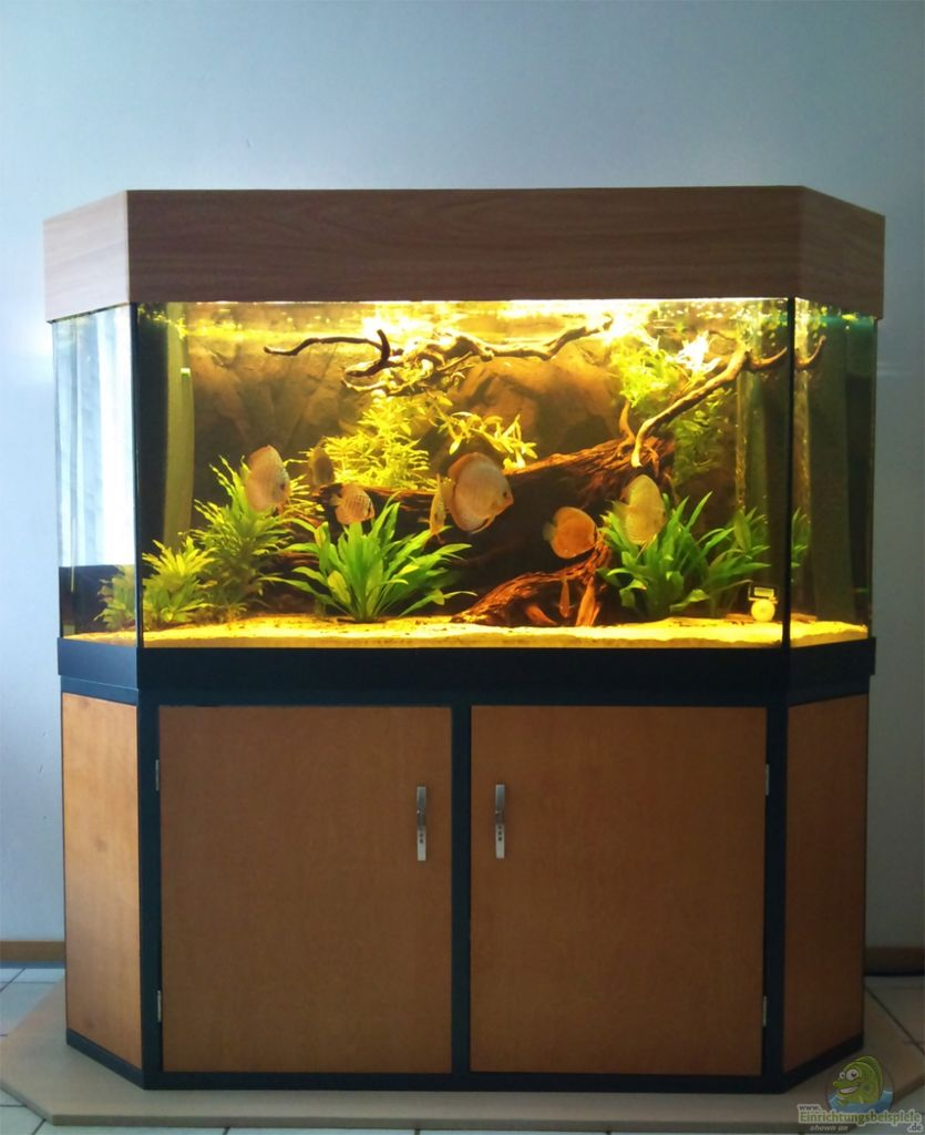 Aquarium von christian wittling diskus becken for Diskus aquarium