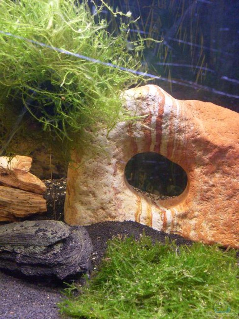 aquarium von lichterschein becken 17299. Black Bedroom Furniture Sets. Home Design Ideas