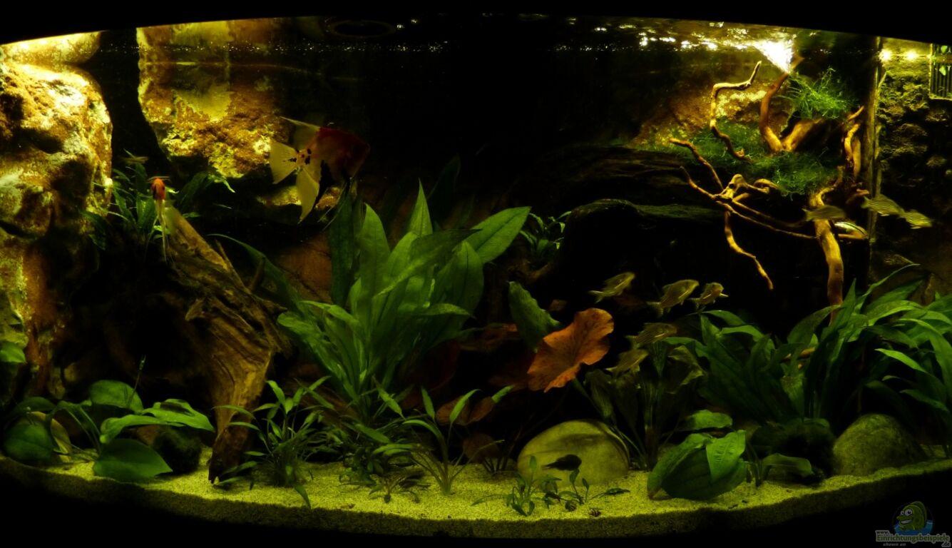 aquarien mit led beleuchtung. Black Bedroom Furniture Sets. Home Design Ideas