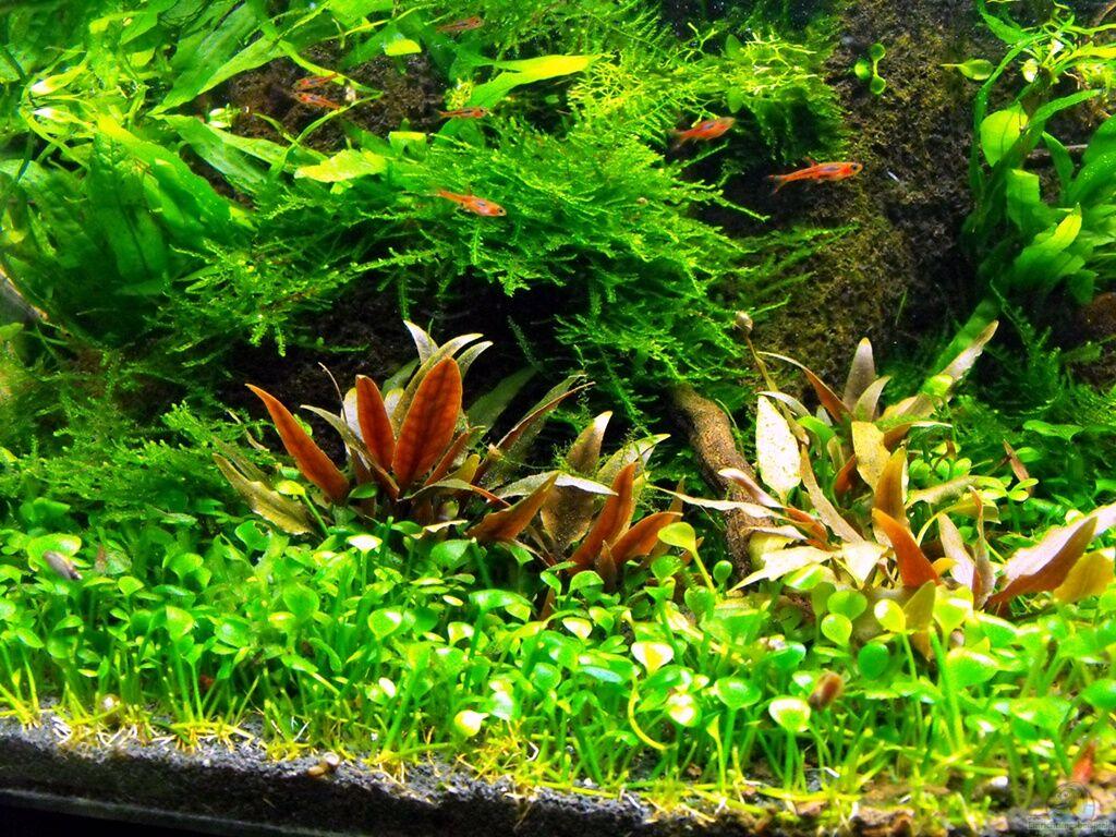 aquarium von serok 375l riparium. Black Bedroom Furniture Sets. Home Design Ideas