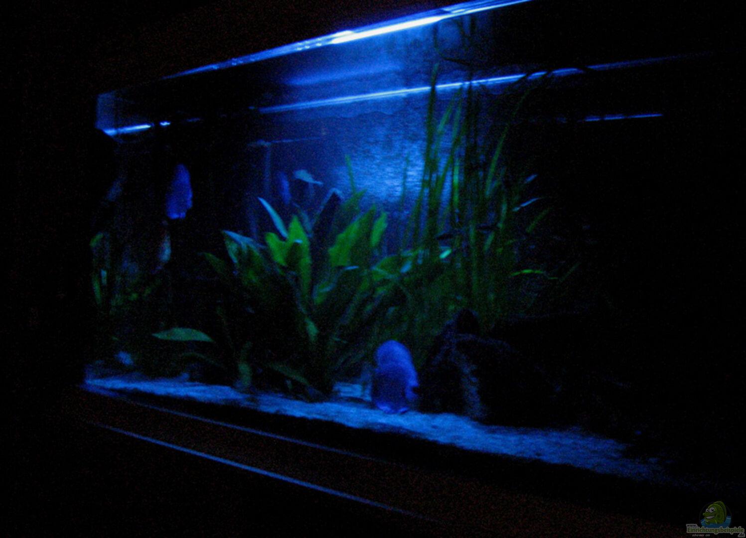 Aquarium von Klaus Kastl: Becken 1743