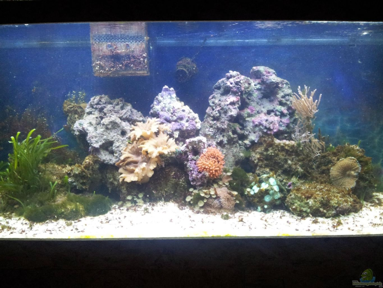 aquarium von maik 450l meerwasser. Black Bedroom Furniture Sets. Home Design Ideas