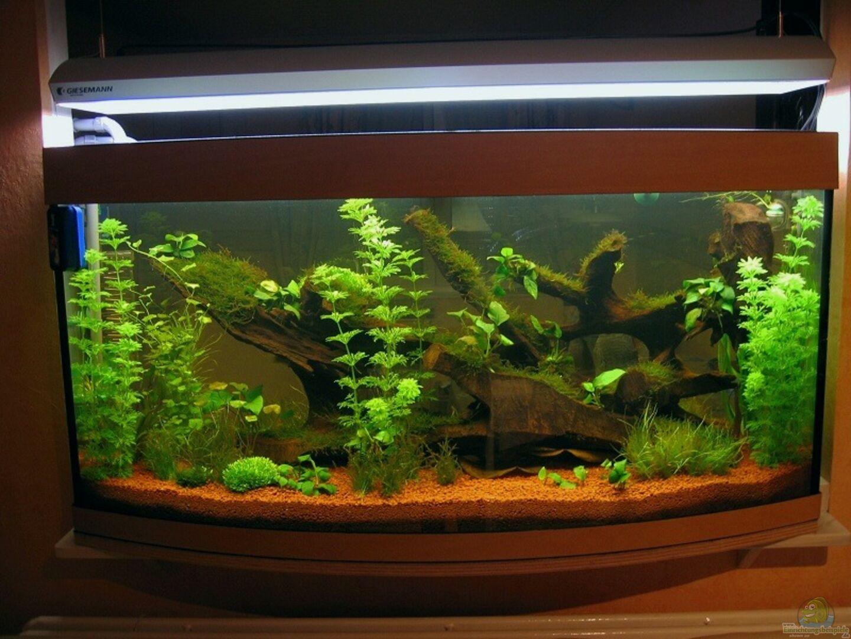 aquarium von hubert demonty becken 1756. Black Bedroom Furniture Sets. Home Design Ideas