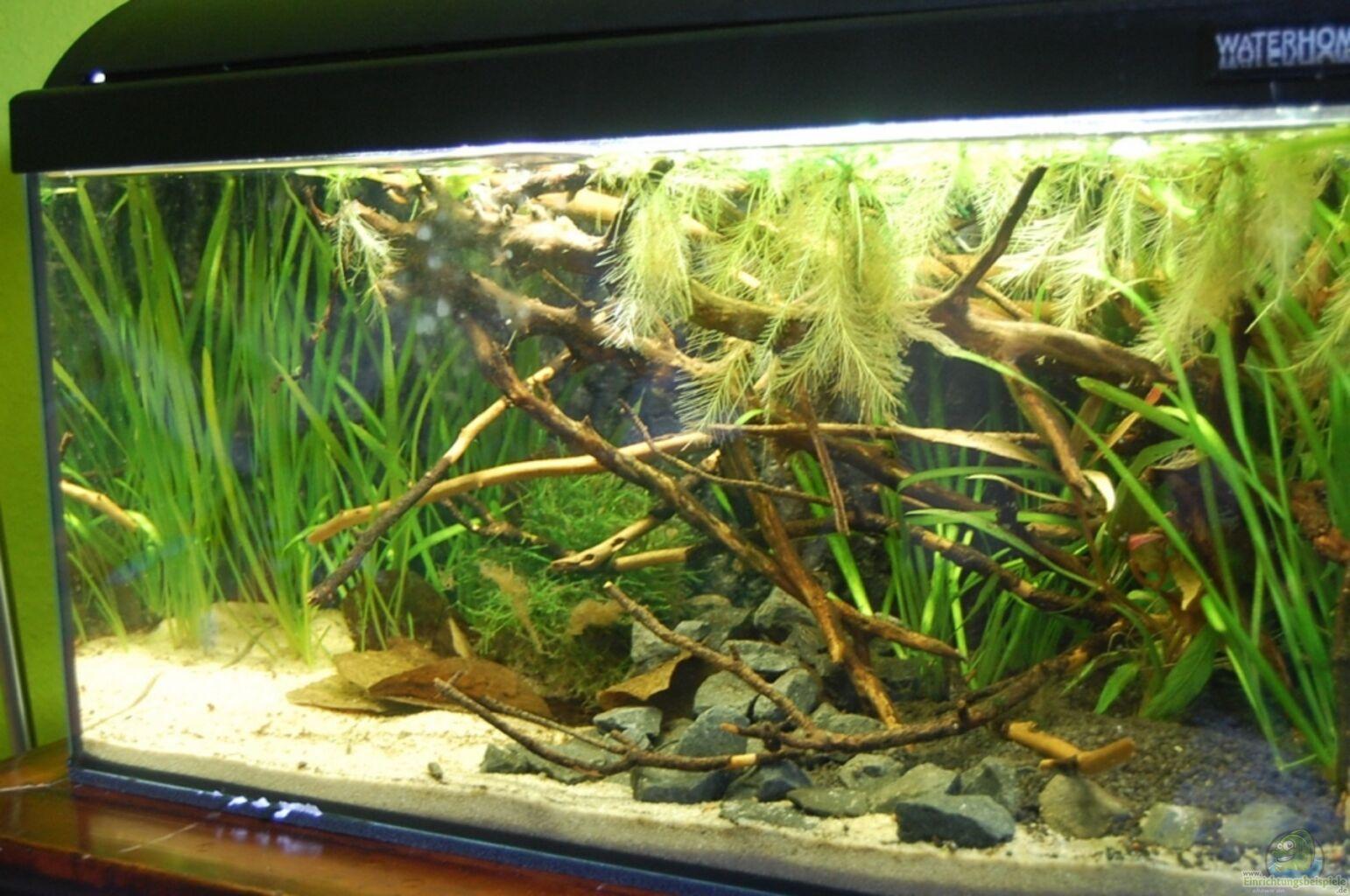 P klad 17576 z kategorie sm en amerika akv ria for Waterhome aquarium