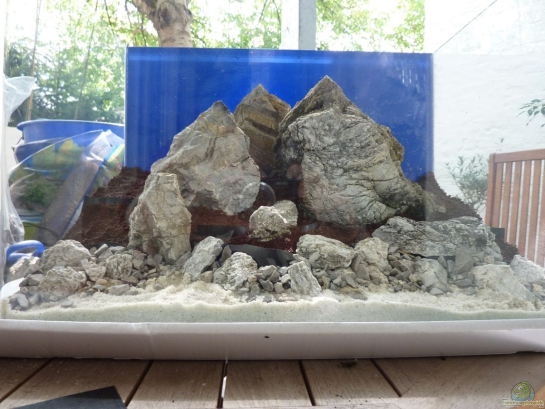 Saltwater Aquarium Tank Setup Guide
