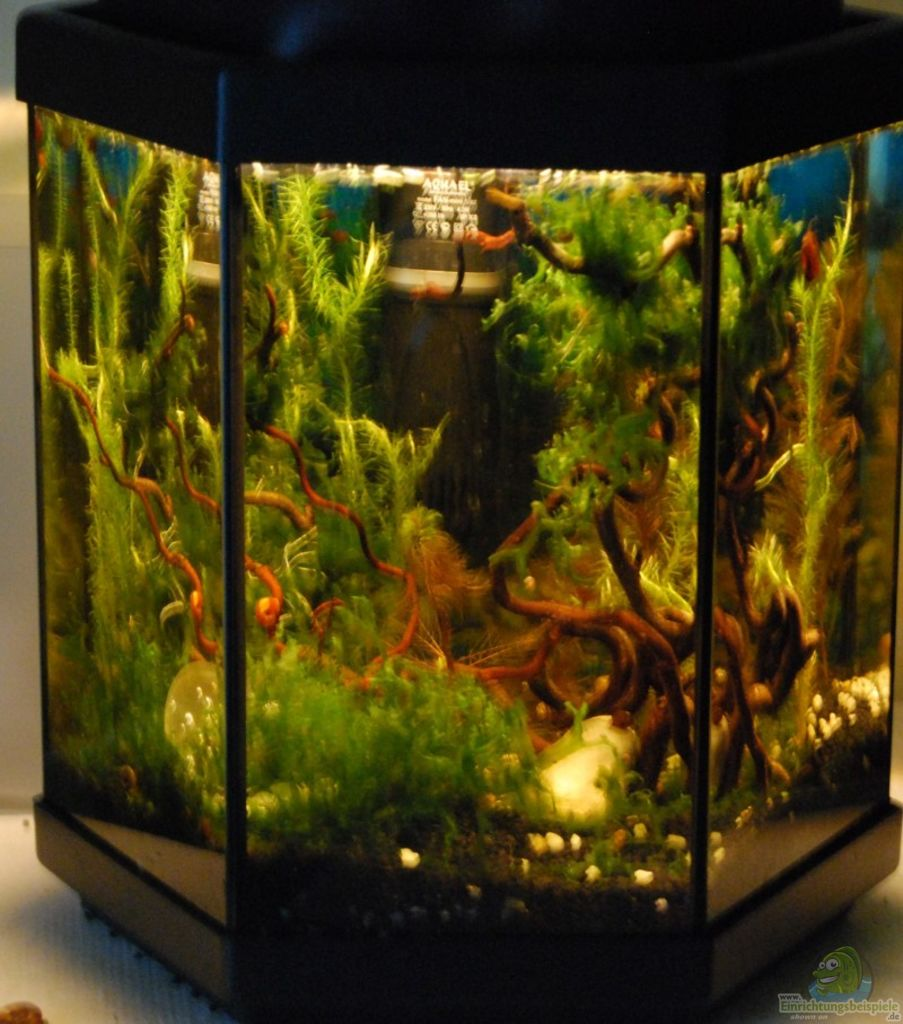 aquarium von julia haselnuss goes aquarium. Black Bedroom Furniture Sets. Home Design Ideas