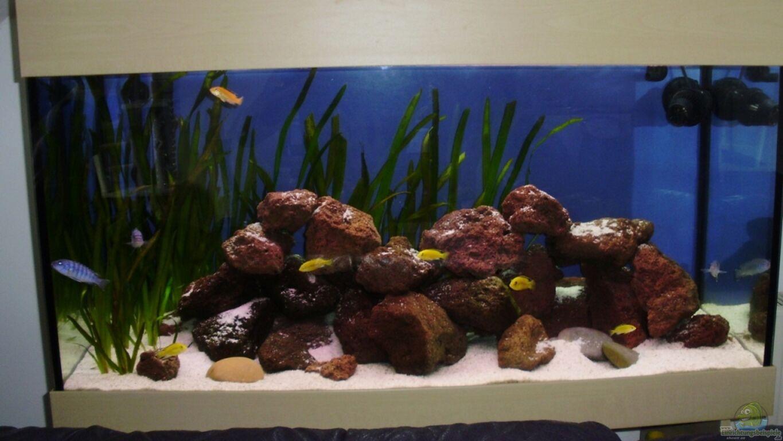 aquarium von bauzel malawibecken. Black Bedroom Furniture Sets. Home Design Ideas