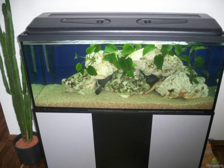 Aquarium von anderl m 17876 240l malawi for Aquarium 120x40x50