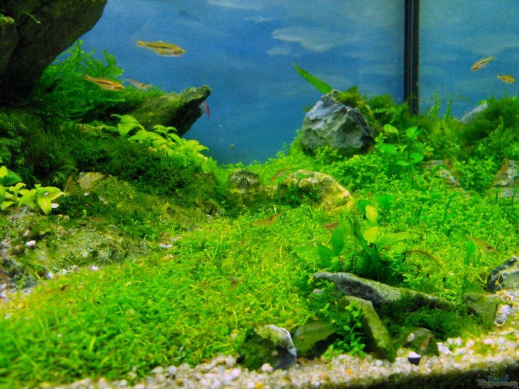 aquarium von serok draussen am kliff. Black Bedroom Furniture Sets. Home Design Ideas