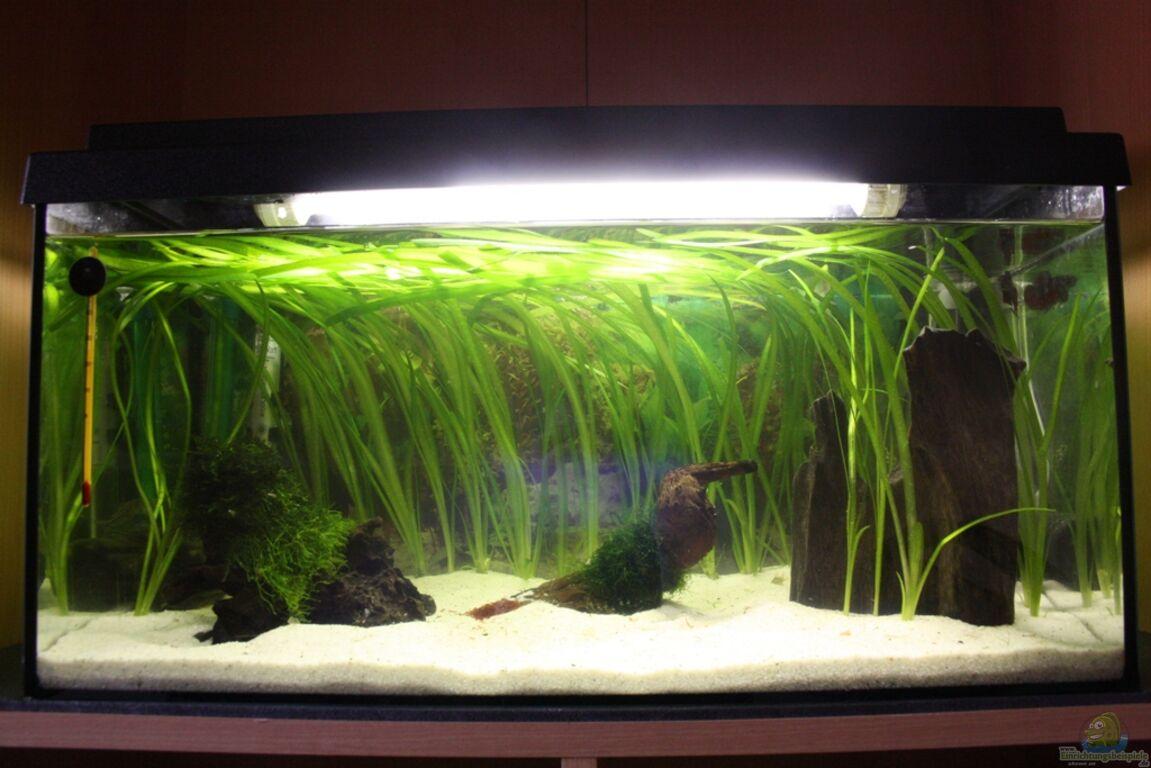 Aquarium von Gerrit  54l Aqua