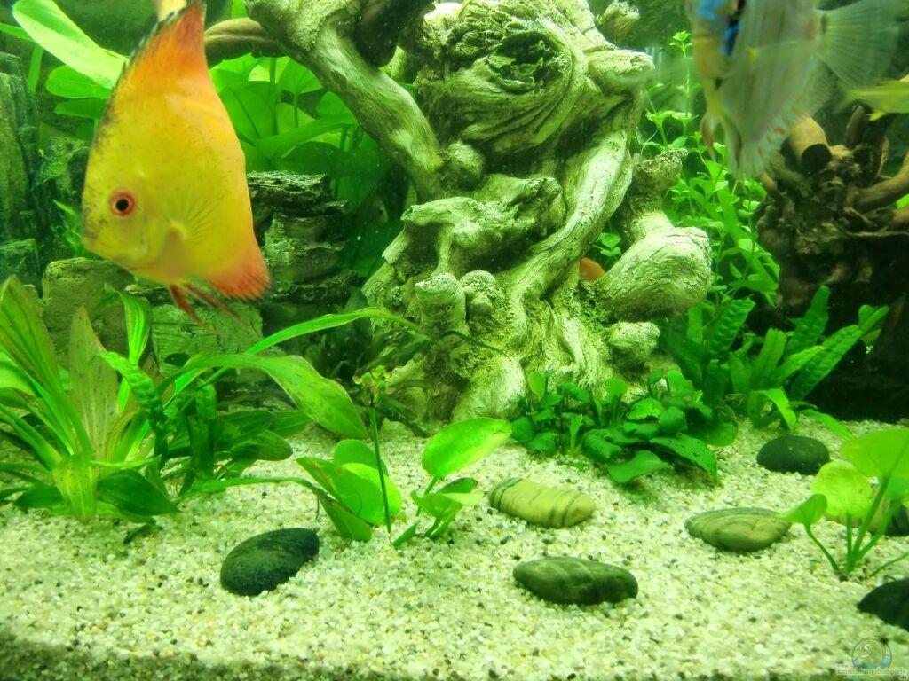 Pflanzen im aquarium juwel vision 450
