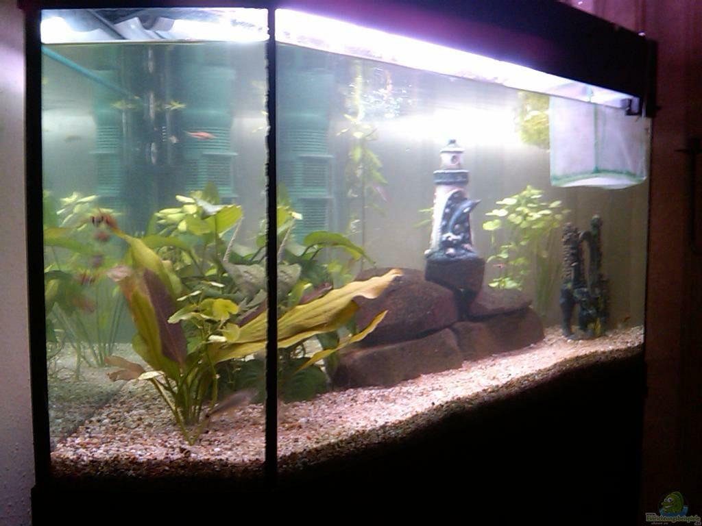 aquarium von oliver mei ner eckaquarium. Black Bedroom Furniture Sets. Home Design Ideas