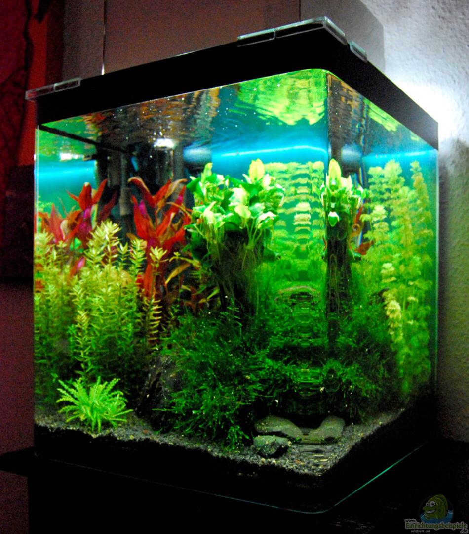 aquarium von horstjansen 18132 nanocube 60l. Black Bedroom Furniture Sets. Home Design Ideas