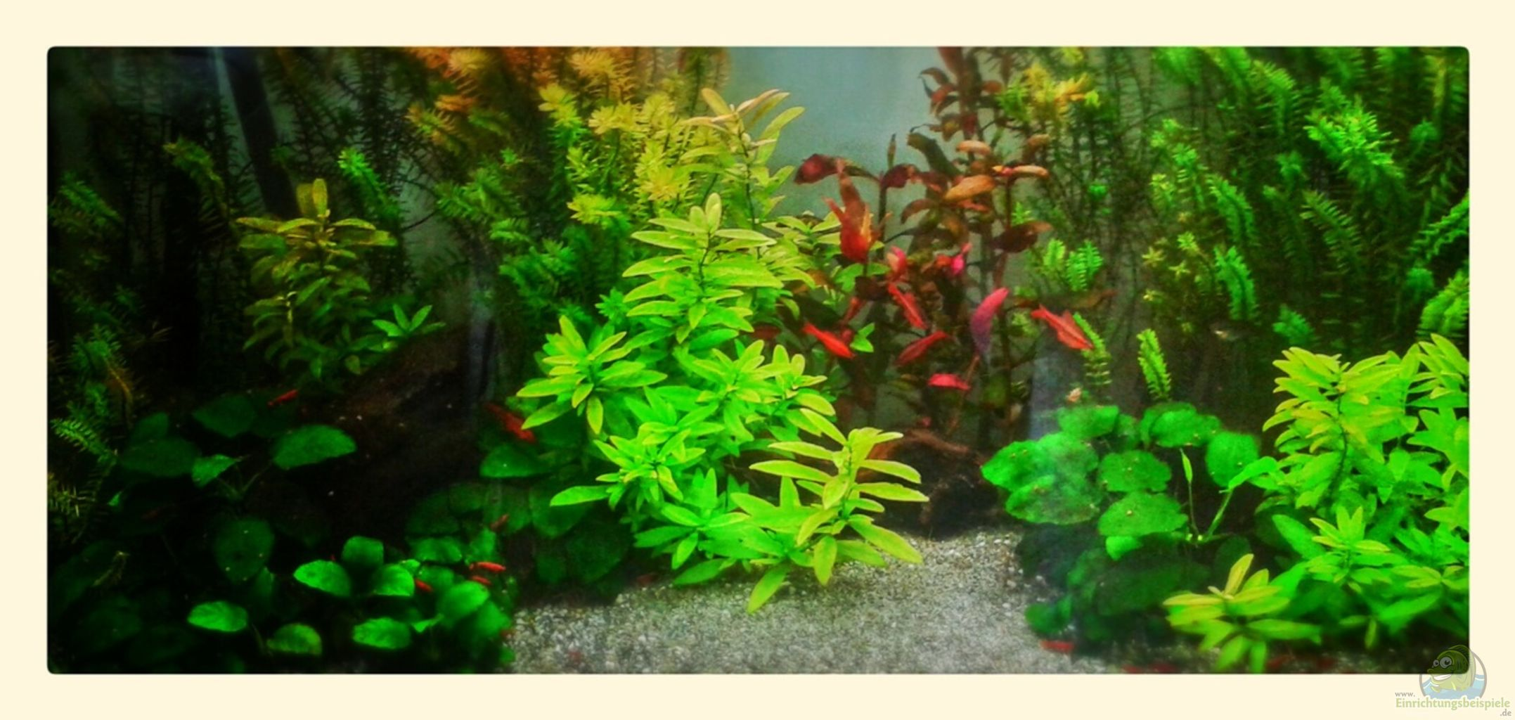 Example no 18135 from the category asia australia for Aquarium 120l