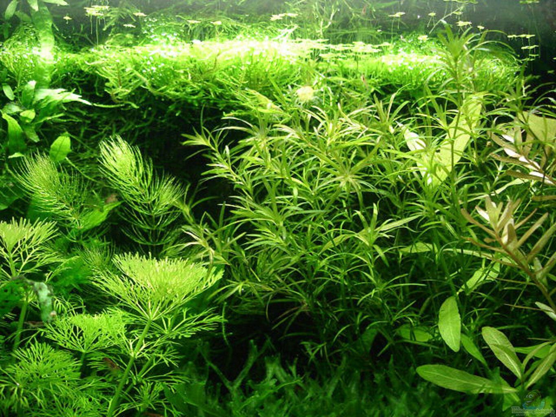pflanzen im aquarium becken 1816 aus becken 1816 von hej kompisar. Black Bedroom Furniture Sets. Home Design Ideas