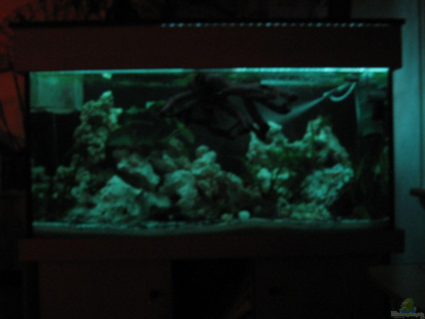 aquarium von sky1706 18168 malawieaquarium 430 liter. Black Bedroom Furniture Sets. Home Design Ideas