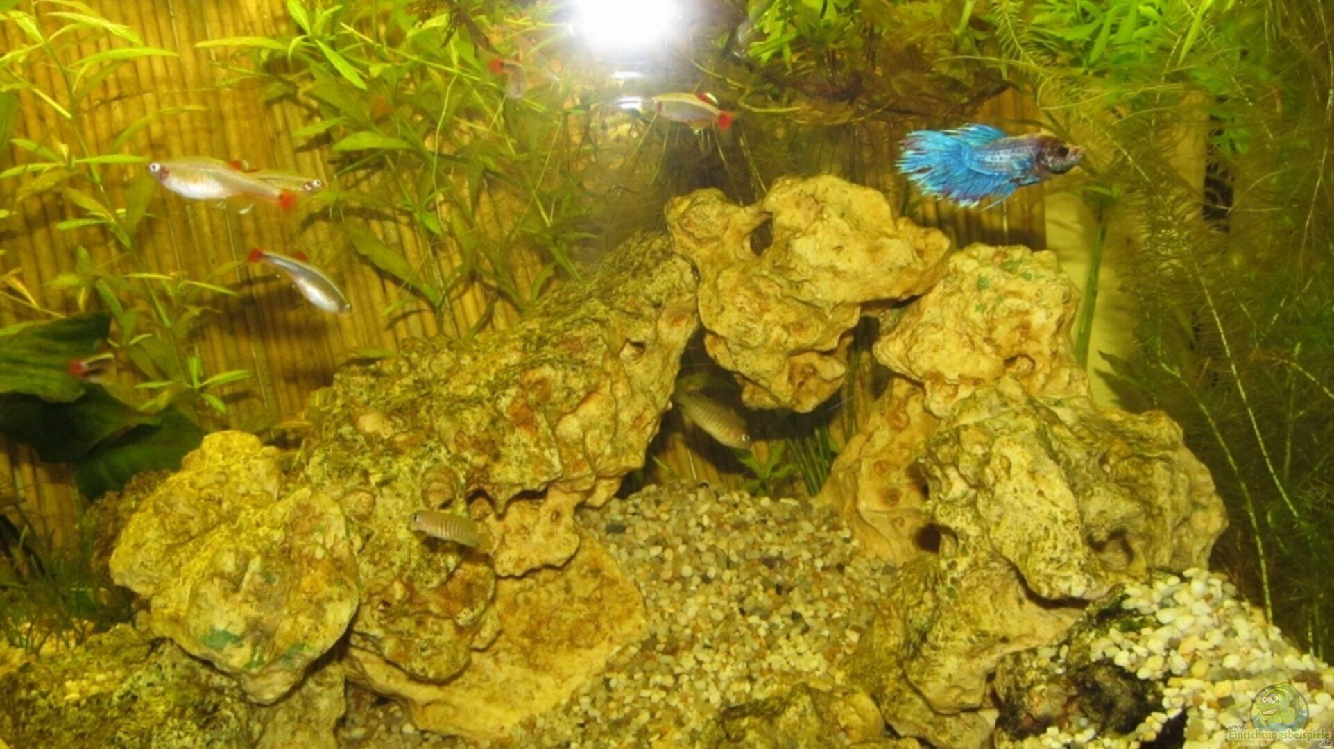 Aquarium von thomas priebe becken 18187 for Kampffisch becken