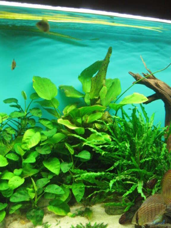 aquarium blasen an pflanzen. Black Bedroom Furniture Sets. Home Design Ideas