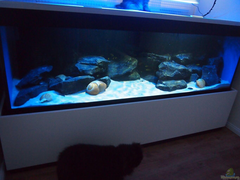 aquarium von andriko mbuna meets basalt. Black Bedroom Furniture Sets. Home Design Ideas
