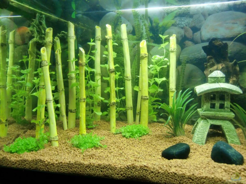 Aquarium Von Ecosys 18260 Asia