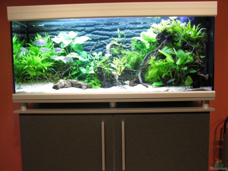 Aquarium von aquadog 18279 african queen for Aquarium 120x40x50