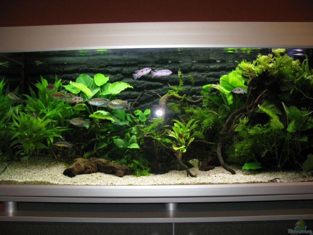 aquarium von aquadog african queen. Black Bedroom Furniture Sets. Home Design Ideas