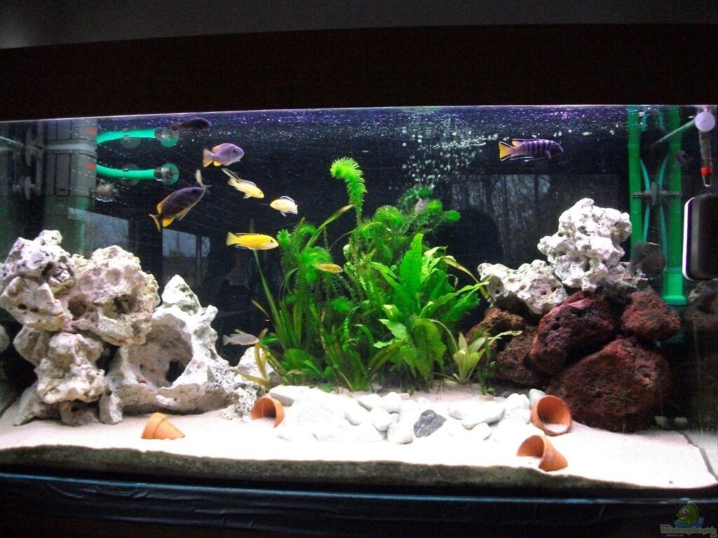 aquarium von checker malawi becken. Black Bedroom Furniture Sets. Home Design Ideas