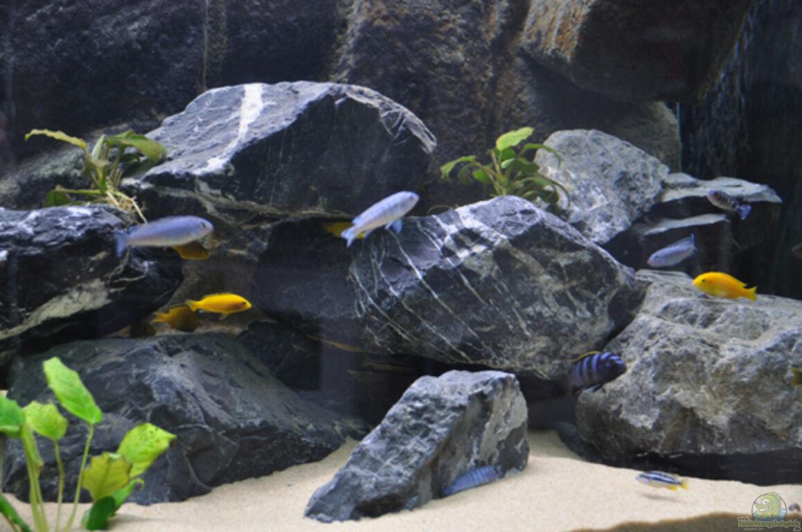 aquarium von sirhawkman malawi becken. Black Bedroom Furniture Sets. Home Design Ideas