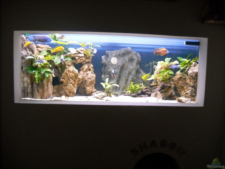 Aquarium von herbert becken 18312 - Aquarium in der wand ...