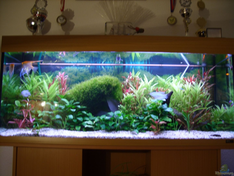 aquarium von dominic regett becken 18323. Black Bedroom Furniture Sets. Home Design Ideas